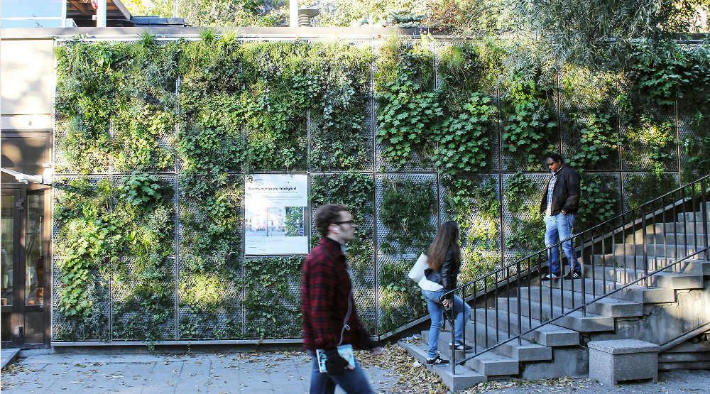 Vertikal trädgård processen