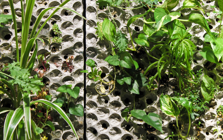 Växtväggar på betong från Butong