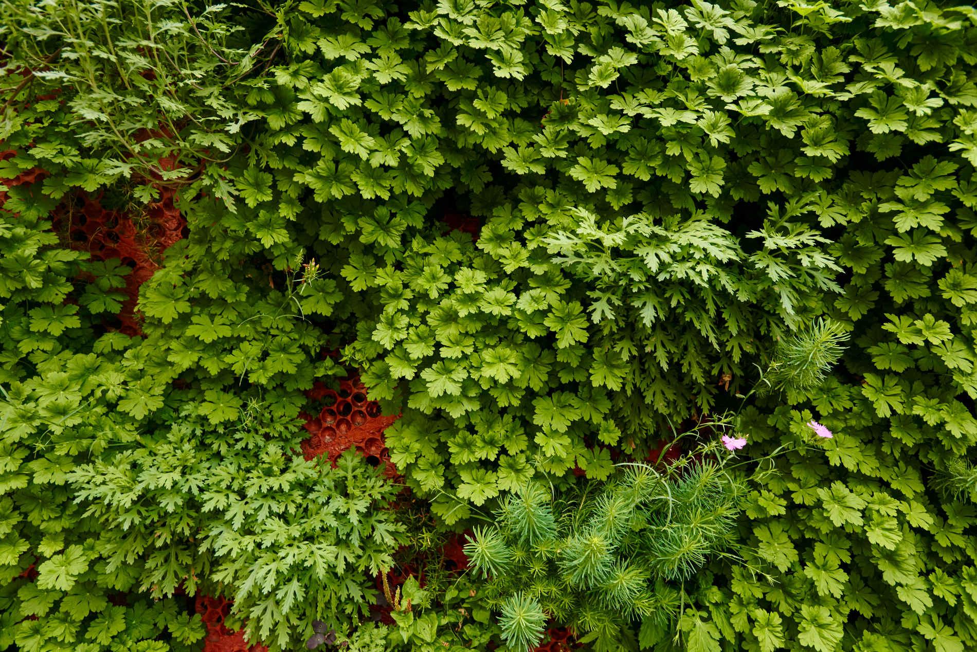 Gröna fasader Uppsala