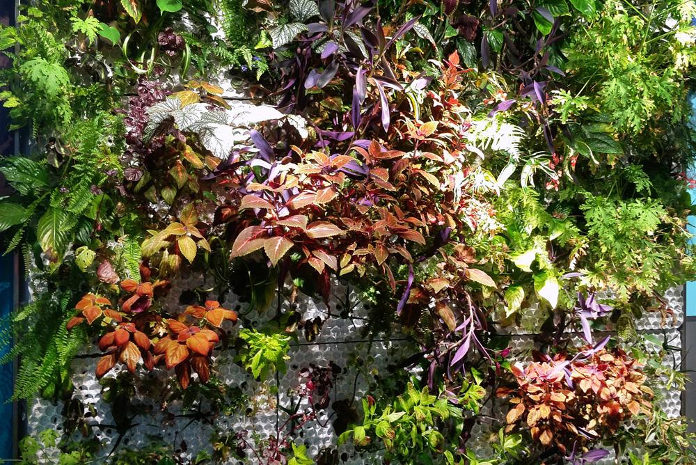 Växtväggar