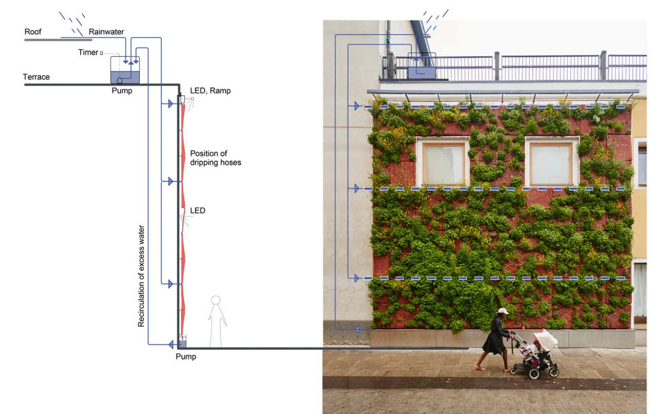 Dagvatten diagram bevattningssystem vid grön fasad