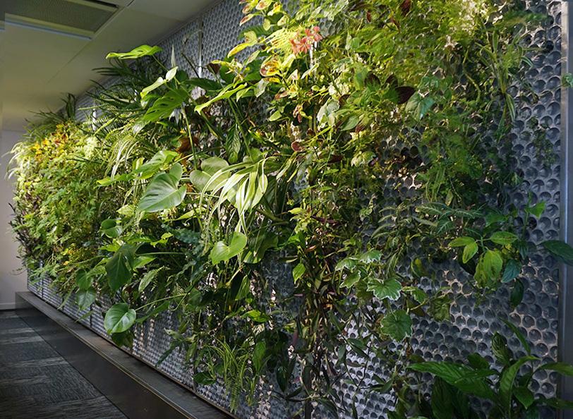 växt paneler