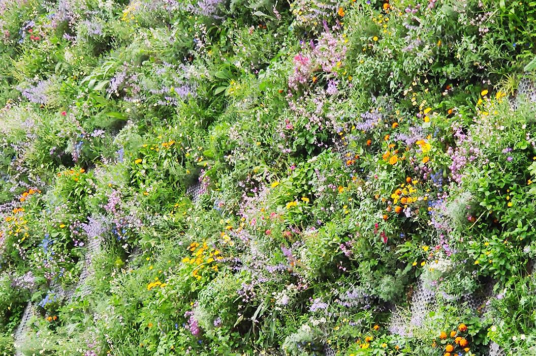 Bullerdämpande växtlighet