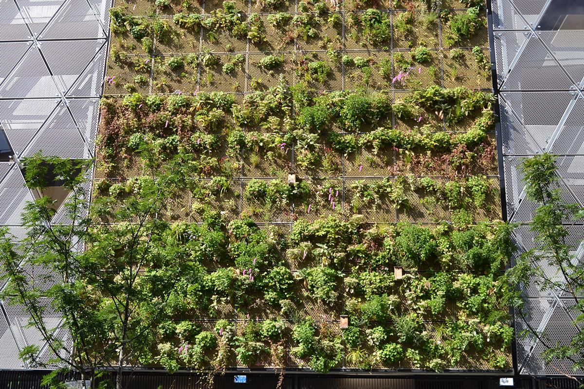Grön fasad Malmö